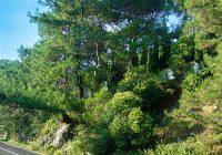 приморский парк гагра